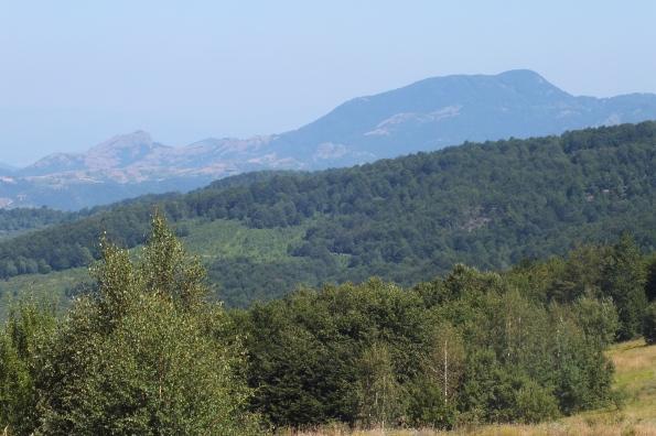 Са Превије. Поглед на Рогозну (Црни врх 1479 мнв) (Фото: Жарко Продановић)