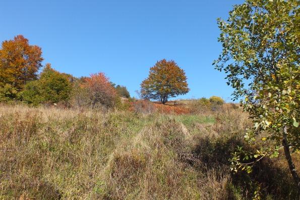 Пејзаж на Роглића брду