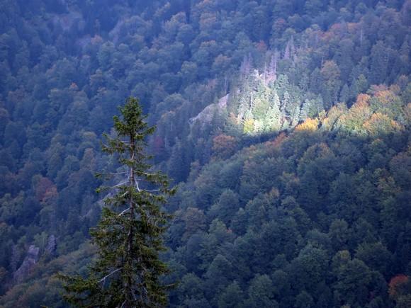 Детаљ у кањону Самоковске реке
