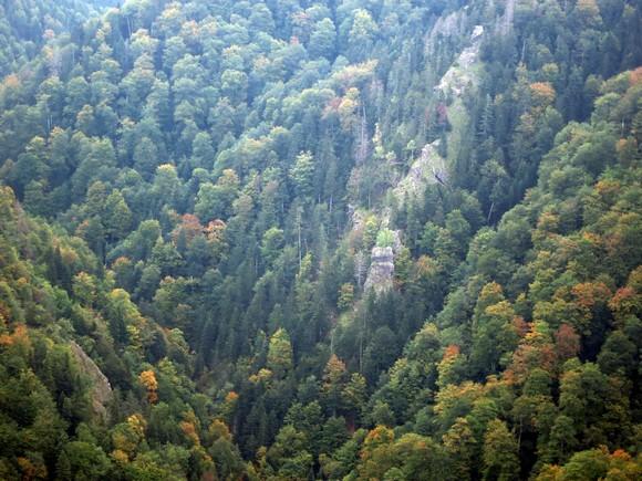 Детаљ у кањону Самоковке